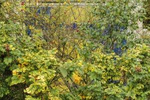 Beuys achter struiken