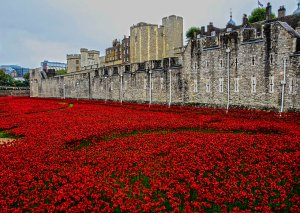 poppies, klaprozen, Blood Swept Lands and Seas of Red